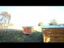 22 сентября 2018г Самый теплый день осени Серые журавли улетели на Юг Готовим пчёл на зимовку Свет и Любовь Любимые
