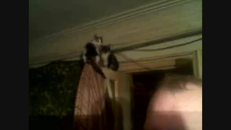 Чи можуть кошенята ходити по стелі