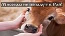 Почему те кто ест мясо не попадут в Рай
