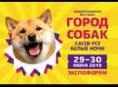 Город собак 29 30 июня 2019