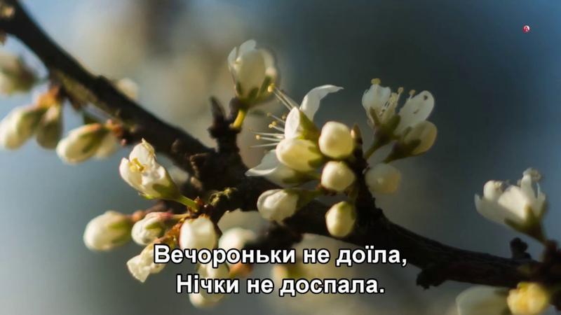 Цвiте терен Таисия Повалий Александр Михайлов и Наташа Королёва Subtitles
