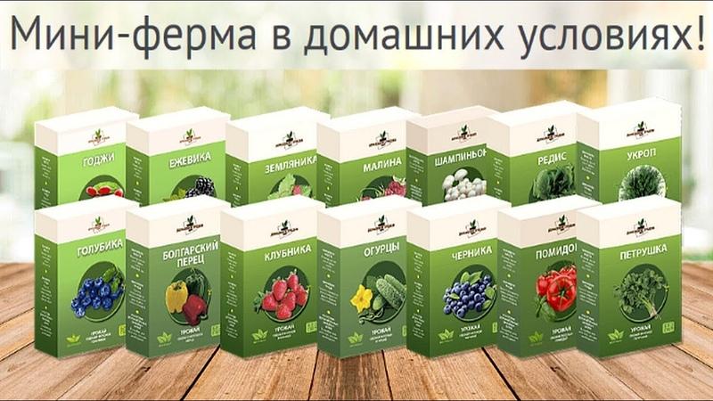 Домашняя ферма. Домашняя Мини Ферма: огурцы, помидоры, редис, укроп, петрушка, годжи, голубика...