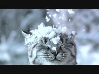 OK VK Snow
