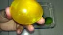 Эксперимент с яйцом / Резиновое яйцо