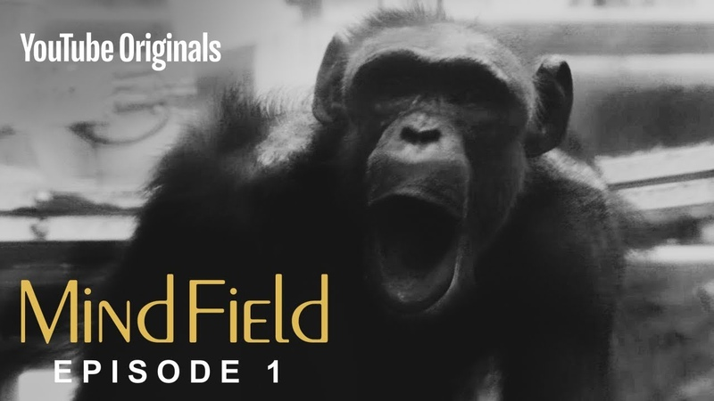 The Cognitive Tradeoff Hypothesis S3 (Ep 1)