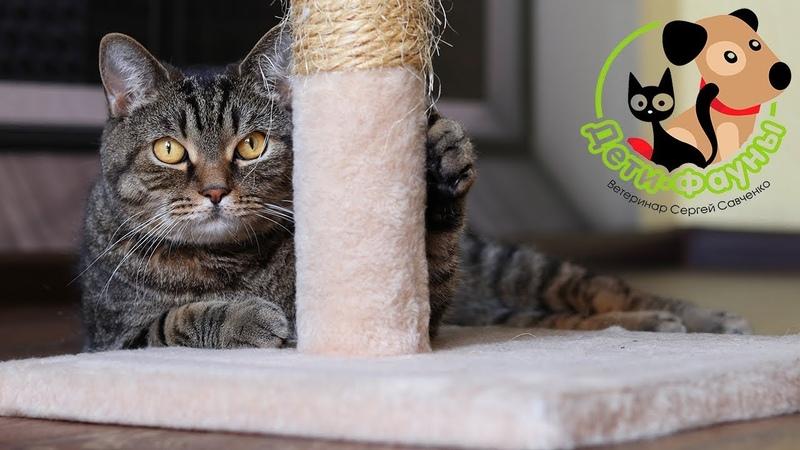 Кошка кашляет как будто подавилась Основные причины кашля у кошек