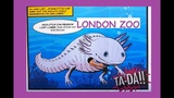 A Day at London Zoo Зоопарк Лондона Katusha