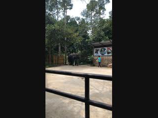 Шоу слонов. Тайланд