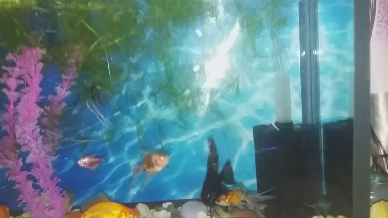 мой подводный мир.
