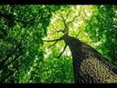 Общий таро прогноз на период 6 марта 5 апреля для людей Дерево ян и Дерево инь