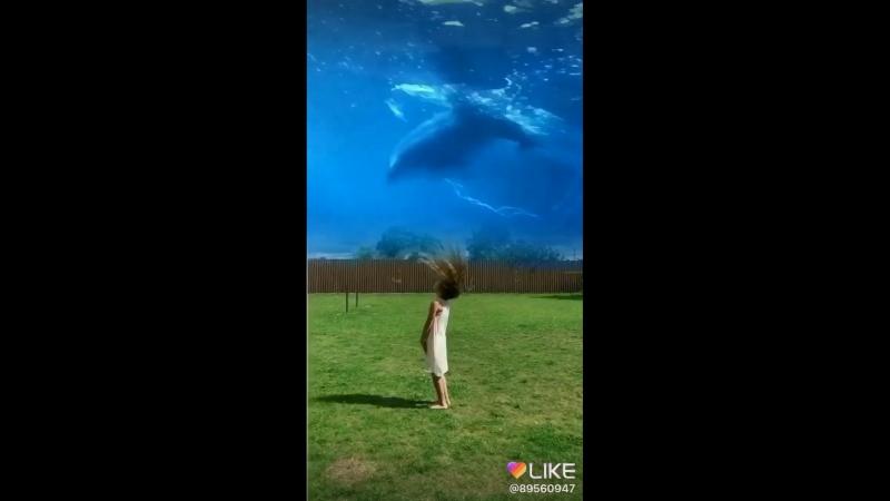 Дельфины,в небе и девочка прыгает и любуется,как-будто небо это океан!