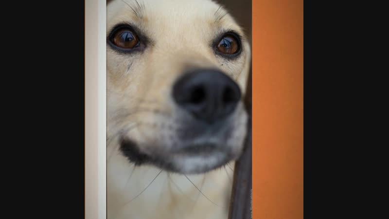 Приют для собак города Тверь