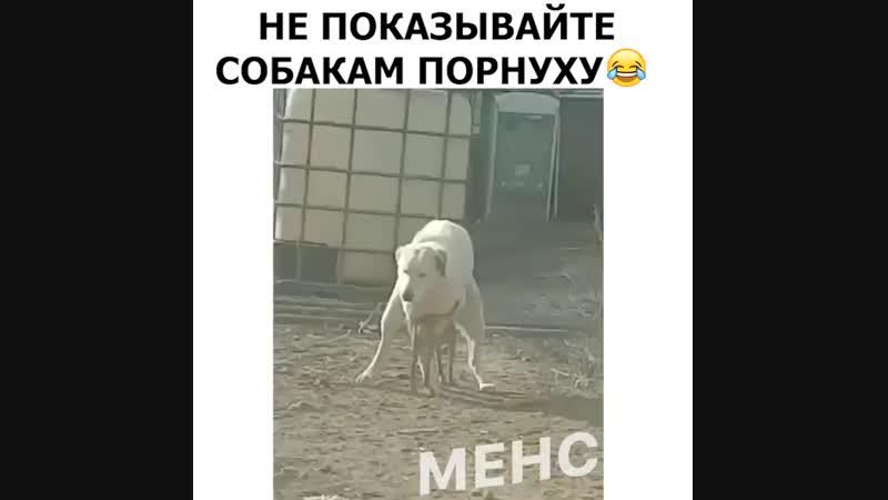 Порно собак