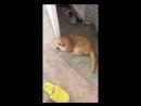 Кот, я хочу подрочить
