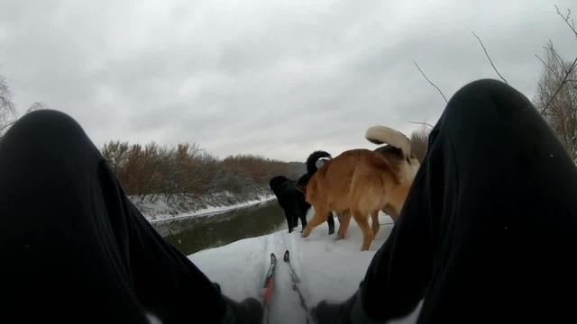 МишкоБэн в Красном Бору с собачками · coub коуб