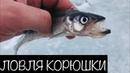 Рыбалка на Корюшку. Финский Залив ДЮФЗ