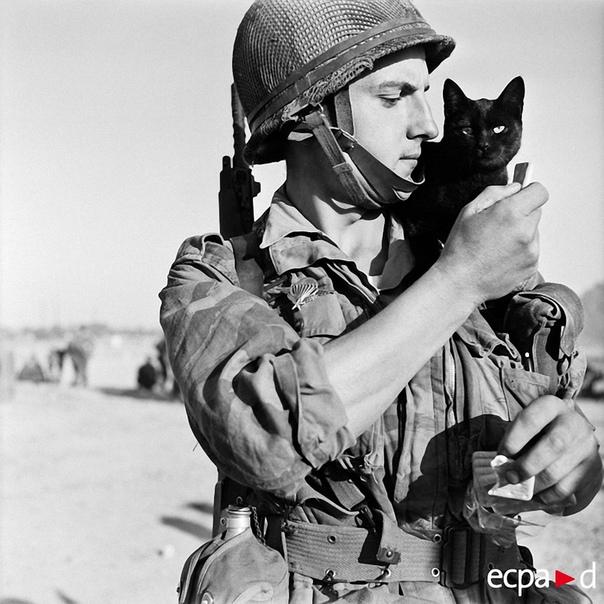 Как кошки участвовали в войне Известно, что кошка у древних египтян считалась священным животным, а за причинение ей вреда человека могли строго наказать или даже приговорить к смертной казни.