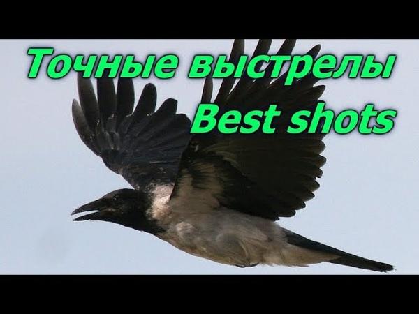 Почему мы стреляем серую ворону.Точные выстрелы.Why we shoot gray crow. Best shots on crows.