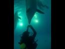 Люди - дельфины и человеки (Вадим Стрункин)