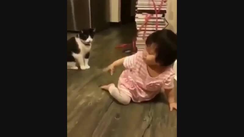 Кот подлец