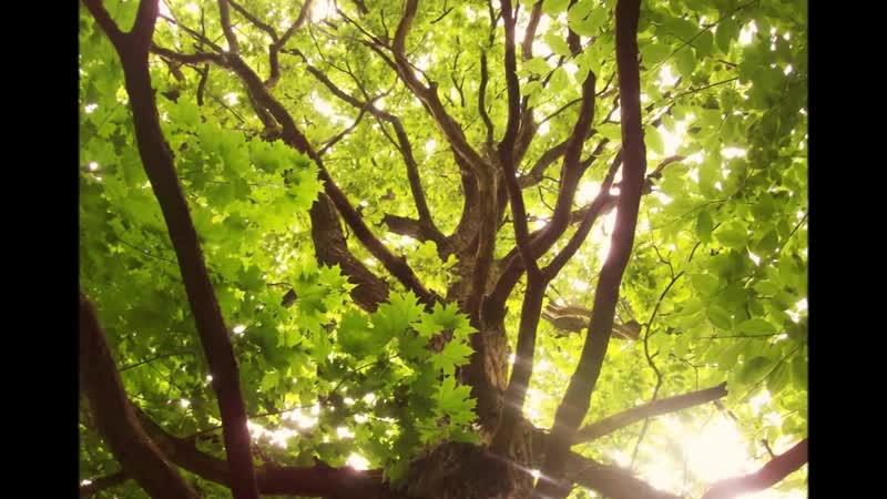 Шопен Таинственный лес