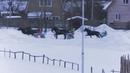 6 Раменский ипподром 20.01.19 - Лошади рожд. 2016г. рысистых пород