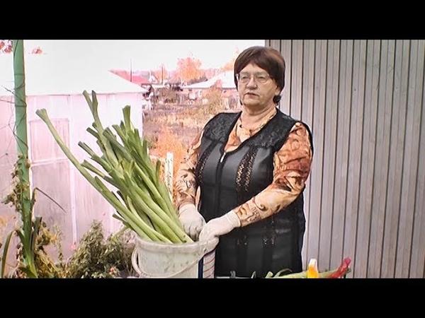 Удачная среда - убираем урожай лука и чеснока на хранение (Бийское телевидение)