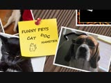 Funny_CATS_-_HOLD_YOUR_LAUGH_IF_YOU_CAN__CHALLENGE__(MosCatalogue.net)