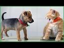 Gatti e cani pazzi garantiti per farti ridere ✪ Prova a non ridere 38
