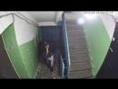Североморский похититель лампочек
