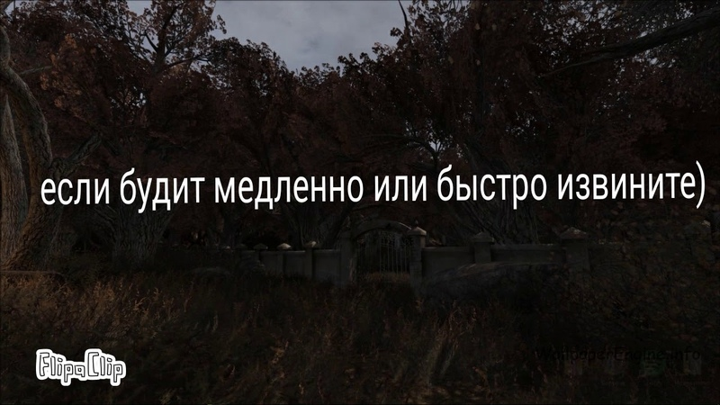 Чудо Лес meme (STALKER рыжий лес)