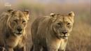 Nat Geo Wild Смертоносная Африка. Степи 2018