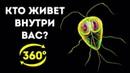 Тайная Жизнь Бактерий в Вашем Организме 360 VR
