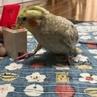 Tidy parrot