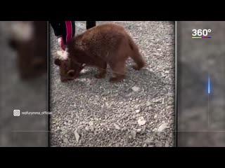 Спарринг Нурмагомедова и медвежонка