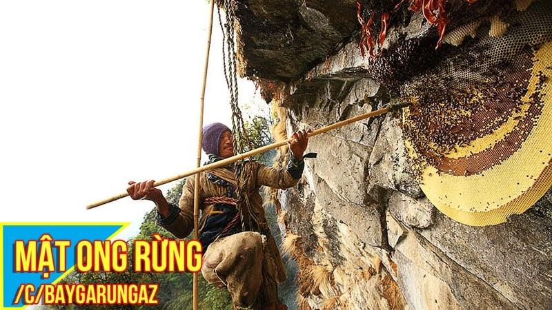 Nghề hái ra tiền của người dân Nepal | lấy mật ong rừng