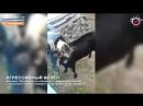 Мегаполис - Козёл - Нижневартовск