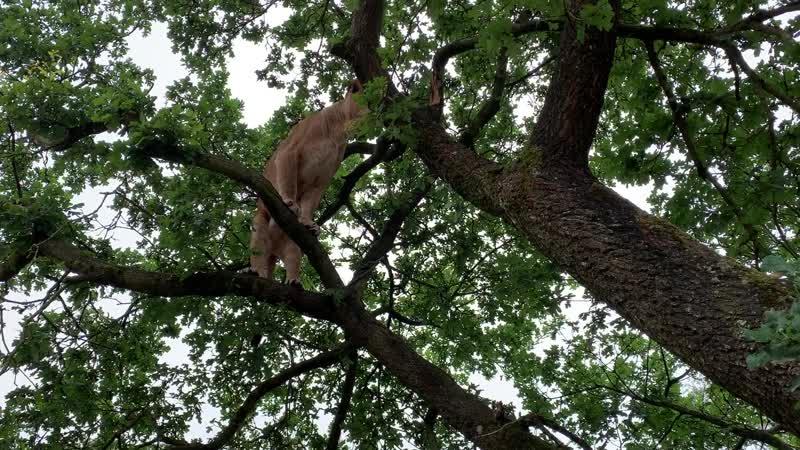 ВНИМАНИЕ! И на деревьях львы