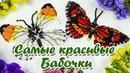 Бабочка из бисера кирпичным стежком Мастер класс и Схема плетения