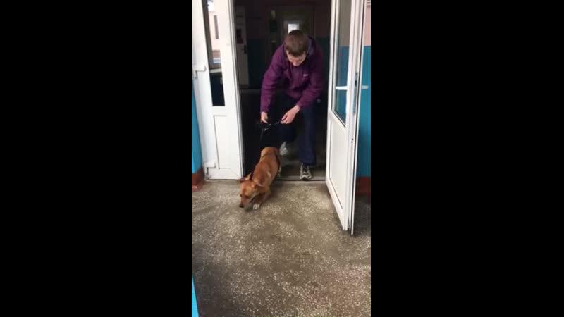 Спасения собак с Гурского