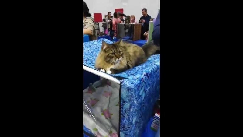 Тигруша 8 мес. на выставке.