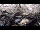 Porcini aereus in macchia mediterranea da diavolorosso