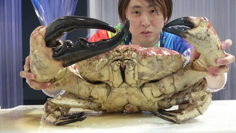 1匹17万円!世界最大のカニ『タスマニアキングクラブ』をさばいて食べ 12