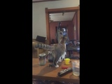 Cat Accidentally Turns on Vacuum and Gets Scared - 1005883