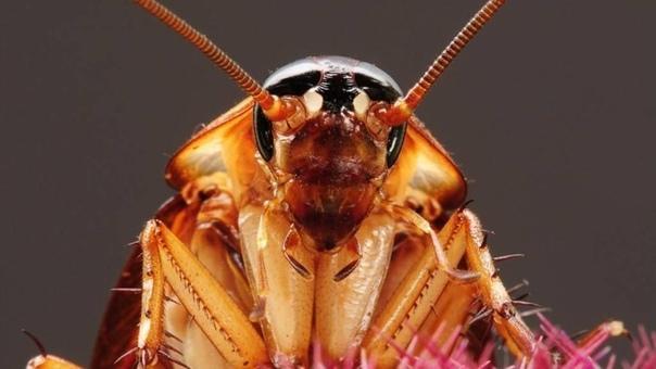 Посмотрите на таракана. Что вы видите Маленькую жалкую козявочку, которая даже укусить не может Нет, вы видите монстра, чудовище! Даже если вы не запрыгните с воплем на стол, всё-равно в вашей