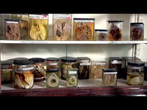 Музей и кафедра патологической анатомии Одесского национального медицинского университета