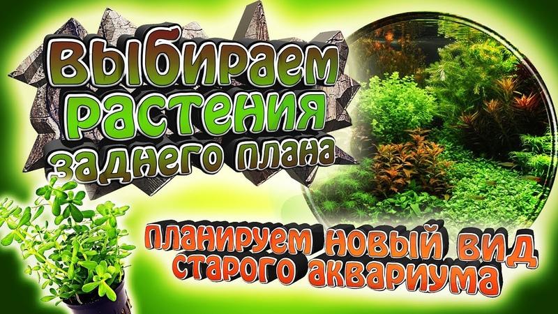 Выбираем лучшие растения заднего плана! - Новый вид старого аквариума