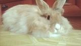 albina_kazan116 video