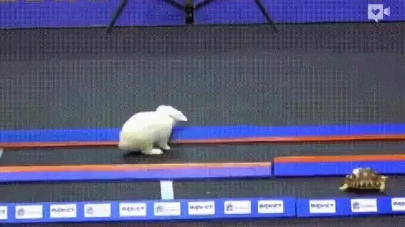 Для достижения целей метод черепахи самый скоростной. Не верите? Смотрите! » Freewka.com - Смотреть онлайн в хорощем качестве