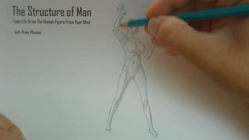 The Structure Of Man HD - 3 - Figure Sketching Basics HD_06
